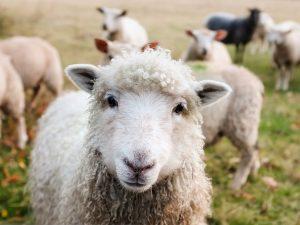 La France Agricole : quelles perspectives pour 2019 ?
