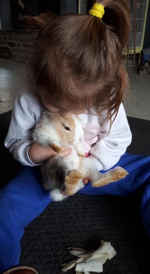 médiation animale avec un lapin et une petite fille