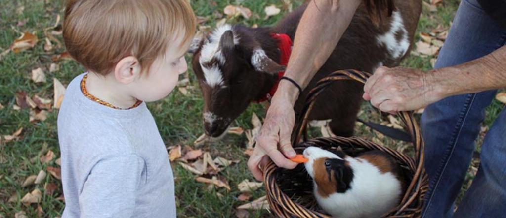 Formation Créer une ferme pédagogique - les entrepreneurs animaliers