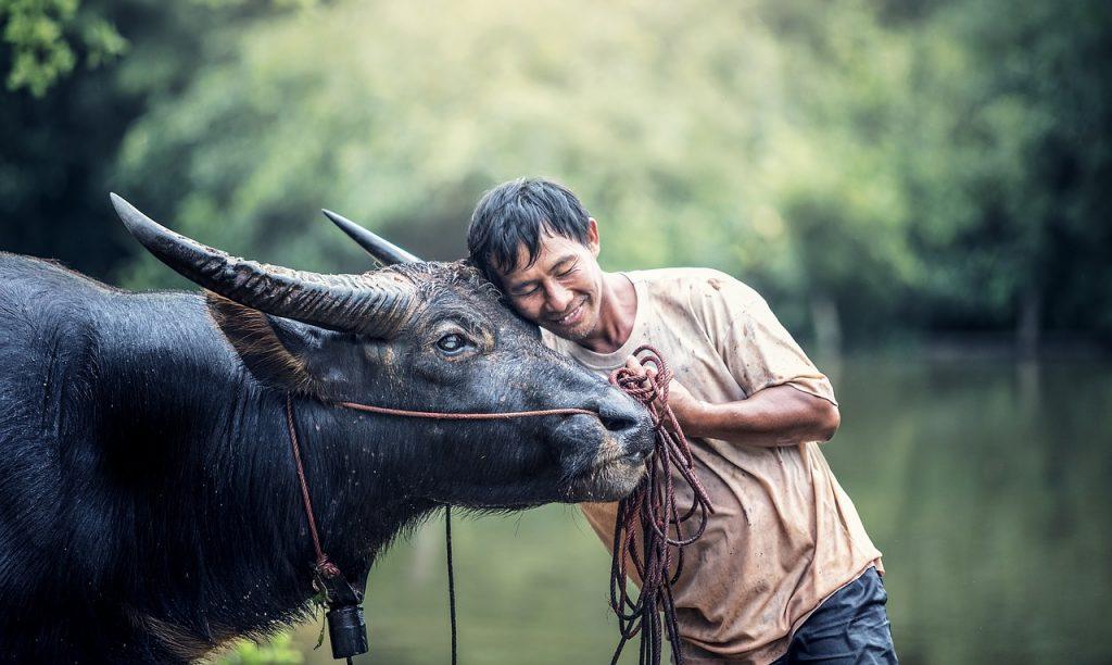 Être dans une relation utilitaire avec son animal n'empêche pas l'attachement
