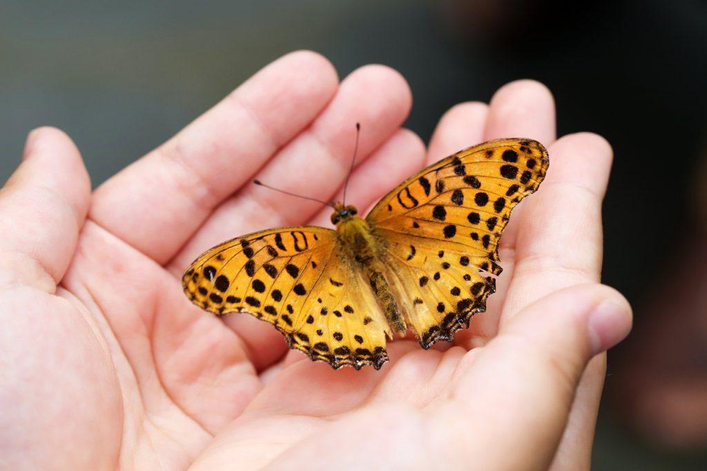 Un papillon posé sur les mains d'une personnes