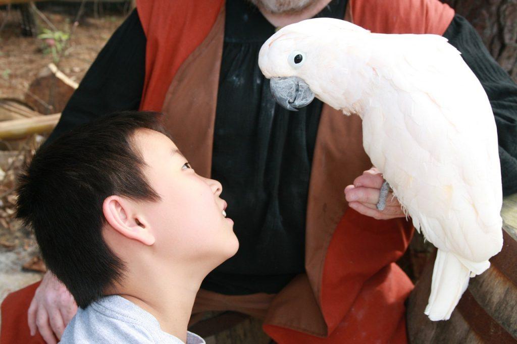 Le comportement du perroquet fascine les enfants (mais pas que !)