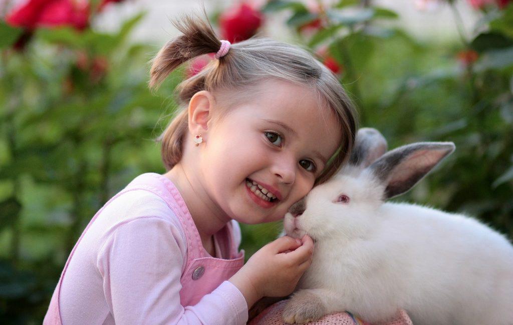 """Le lapin nain est caractéristique d'une relation catégorisée """"animal de compagnie"""""""