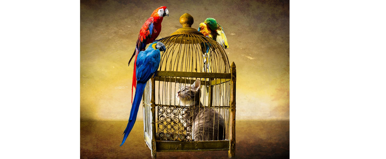 Quand la médiation animale humanise la prison