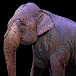 Bien-être animal : et si on réglait la question une bonne fois pour toute ?