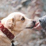 Métiers animaliers : tout savoir sur l'ACACED en 8 questions !