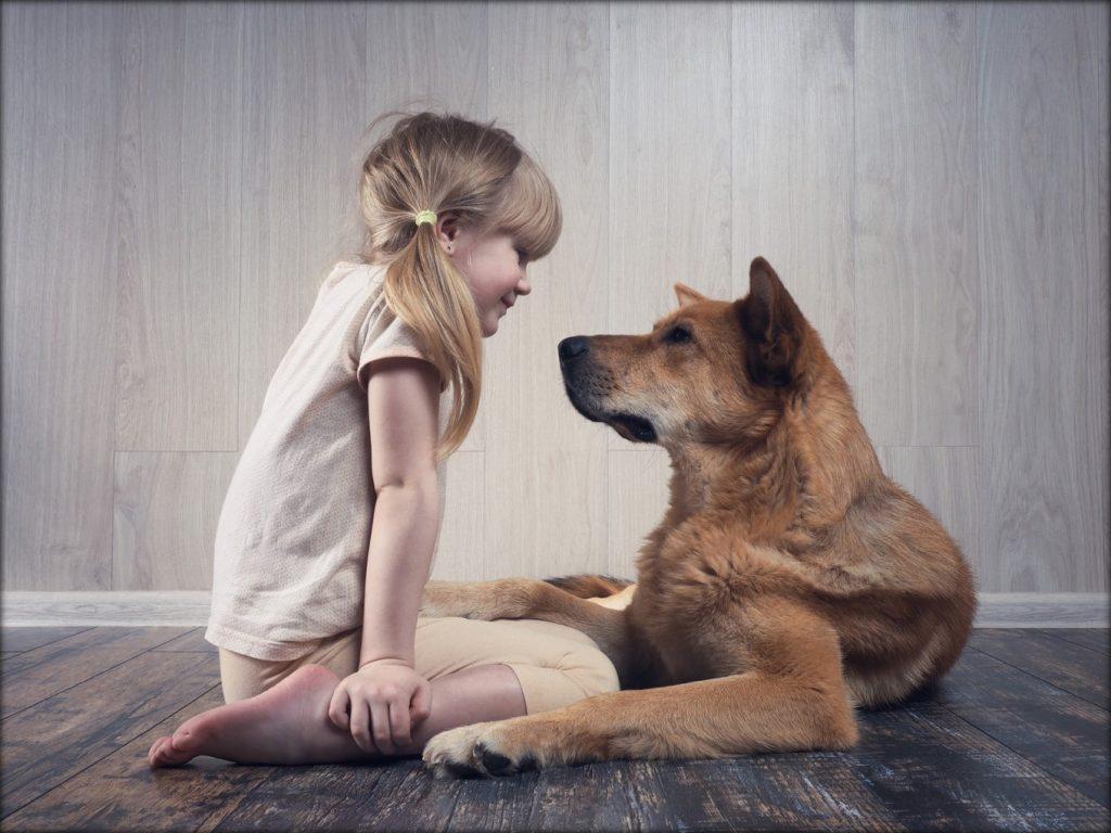 Les relations sociales sont fondamentales pour le développement de l'enfant et de l'adolescent ; jusqu'à présent les études se sont limitées aux relations que les enfants ont avec d'autres humains. Sur cette image, une petite fille et son chien se regardent intensément dans les yeux.